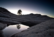 Lone Tree Reflection 1633