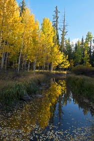 Duck Creek Fall 5040